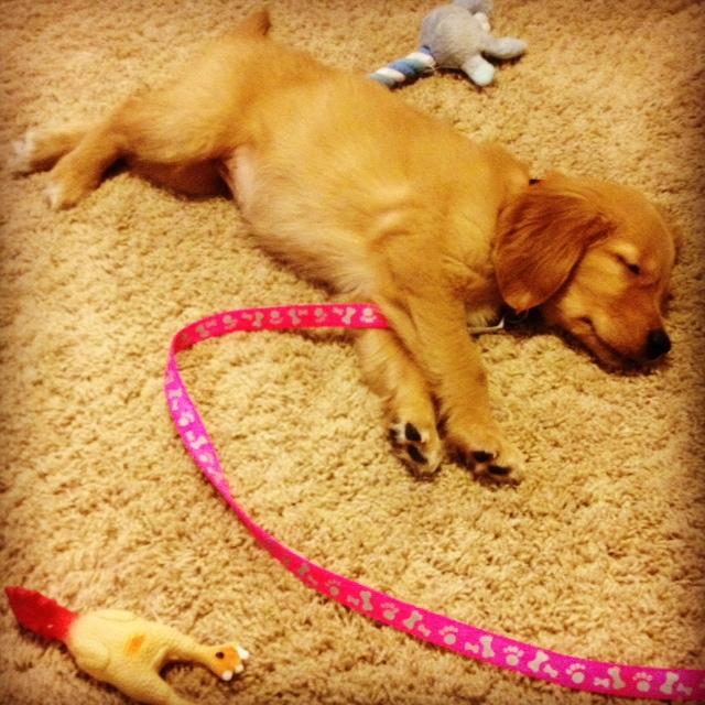 puppy #11