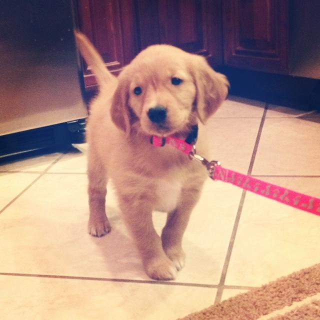 puppy #12
