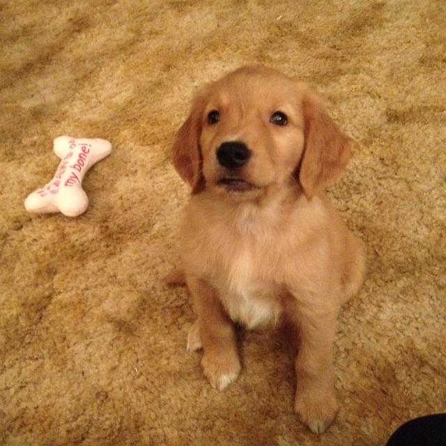 puppy #13