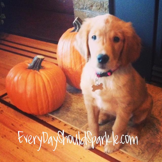Roxie - Pumpkins